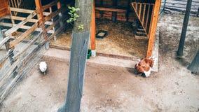 Turkey. On a farm Royalty Free Stock Photo