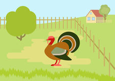 Turkey farm courtyard flat cartoon vector wild animals birds Stock Images