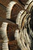 Turkey feathers Stock Image