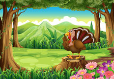 A turkey at the forest Royalty Free Stock Photography