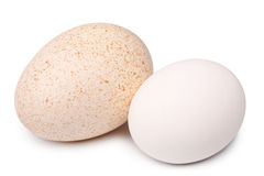 Turkey and hen's eggs Stock Images