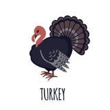 Turkey icon in flat style. Turkey icon in flat style  on white background. Vector illustration Stock Image
