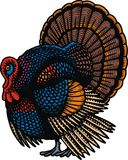 Turkey illustration Royalty Free Stock Photo