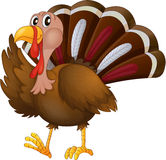 A turkey Royalty Free Stock Image