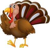 A turkey Royalty Free Stock Image