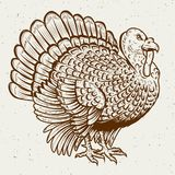 Turkey illustration on white background. Thanksgiving theme. vector illustration
