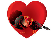 Turkey In Love Royalty Free Stock Photos