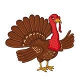 Turkey isolated on the white background stock illustration