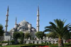 Turkey. Istanbul. Blue mosque and palm tree royalty free stock photography