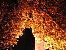 Turkey istanbul night. Mosque night light Stock Photography