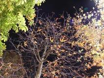 Turkey istanbul night Stock Images