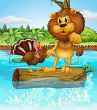 A turkey and a lion above a floating trunk Royalty Free Stock Photography