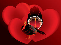 Turkey in love Stock Photos