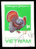 Turkey Meleagris gallopovo, series Chicken Breeds, circa 1985. MOSCOW, RUSSIA - FEBRUARY 19, 2017: A stamp printed in Vietnam shows turkey Meleagris gallopovo Royalty Free Stock Photo