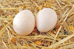 Turkey Nest. New turkey eggs in a nest Stock Photos
