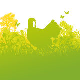 Turkey On The Meadow Royalty Free Stock Images