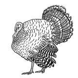 Turkey outline illustration. Turkey bird Royalty Free Stock Photo