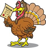 Turkey with Pardon Stock Photography