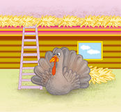 Turkey in a pen Royalty Free Stock Photos