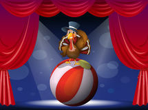 A turkey performing on stage with a ball Royalty Free Stock Photo