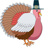 Turkey Pilgrim Royalty Free Stock Photos