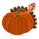 Turkey Pilgrimin on Thanksgiving Day Royalty Free Stock Photography