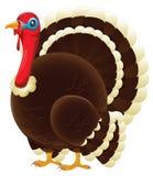 Turkey stock illustration