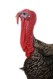 Turkey Royalty Free Stock Images