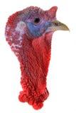 Turkey Royalty Free Stock Photo