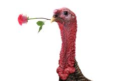 Turkey Royalty Free Stock Photography