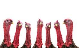 Turkey stock photos