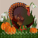 Turkey and pumpkins. Stock Photography