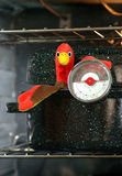 Turkey in Roaster with Meat Thermometer. Stuffed turkey in roaster pan with meat thermometer (digitally added eyes royalty free stock photos