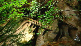 Turkey Run State Park Bear Hollow. Ladders ascend a steep canyon of Bear Hollow at Turkey Run State Park in Indiana stock footage