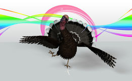Turkey running. Thanksgiving turkey are running with loads of color Royalty Free Stock Images