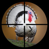 The Turkey in the scope. Royalty Free Stock Photos