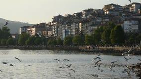 City harbor sea water shore and seagulls at sea. Turkey sea port of zonguldak eregli coastal cities and water seagulls stock video footage