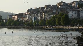 City harbor sea water shore and seagulls at sea. Turkey sea port of zonguldak eregli coastal cities and water seagulls stock footage