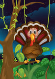 A turkey standing on a branch of a tree Stock Photos