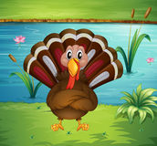 A turkey standing in the riverside Royalty Free Stock Image