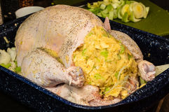 Turkey stuffed and ready to roast Royalty Free Stock Photo