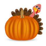 Turkey on Thanksgiving Day Royalty Free Stock Photo