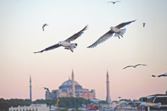 Turkey travel background Royalty Free Stock Photo