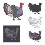 Turkey vector illustration Royalty Free Stock Photos