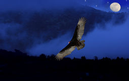 Turkey Vulture in blue fog. Stock Photo