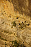 Turkey vultures on canyon cliffs Royalty Free Stock Photos