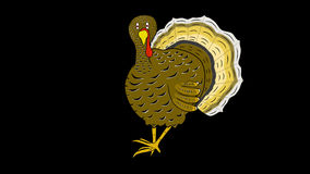 Turkey Walks-Animated-Thanksgiving Title-Alpha stock footage