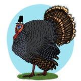 Turkey wearing pilgrim hat illustration. Thanksgiving symbol Stock Photos