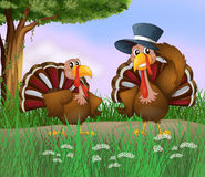 Turkeys along the road Royalty Free Stock Photo