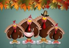 Turkeys family Stock Images